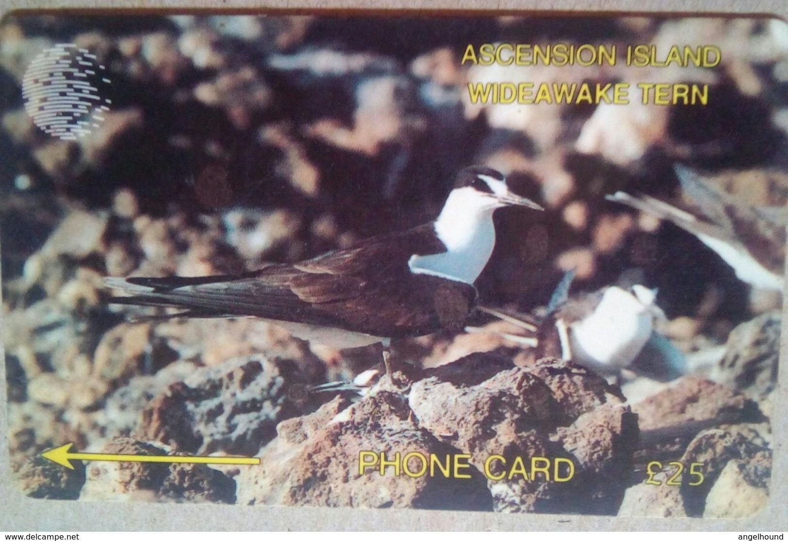 3CASD Wide Awake Tern 25 Pounds - Ascension (Insel)