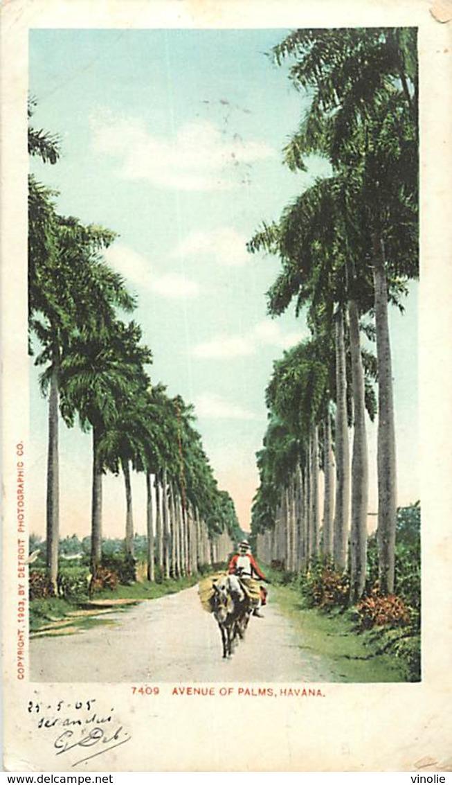 PIE-R-18-1768 : AVENUE OF PALMS. HAVANA - Cuba