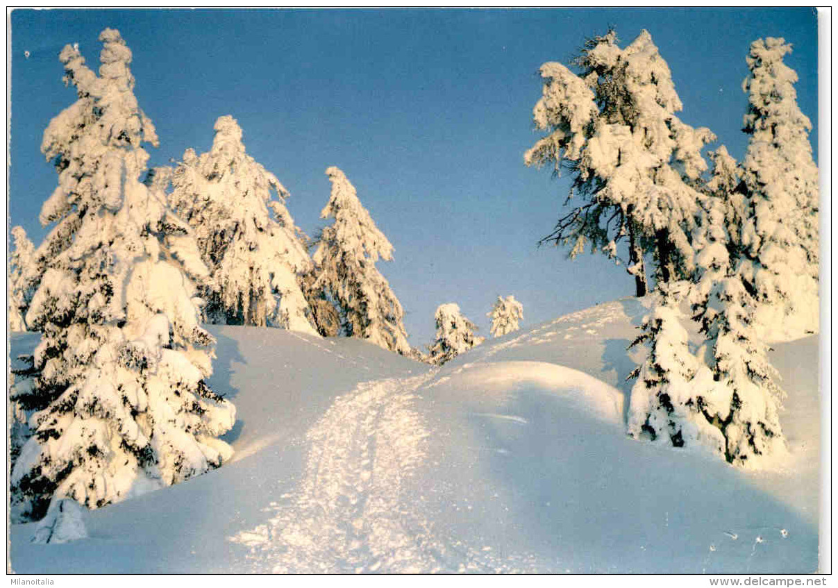 Winterzauber Am Hochstein Bei Lienz (39684) - Lienz