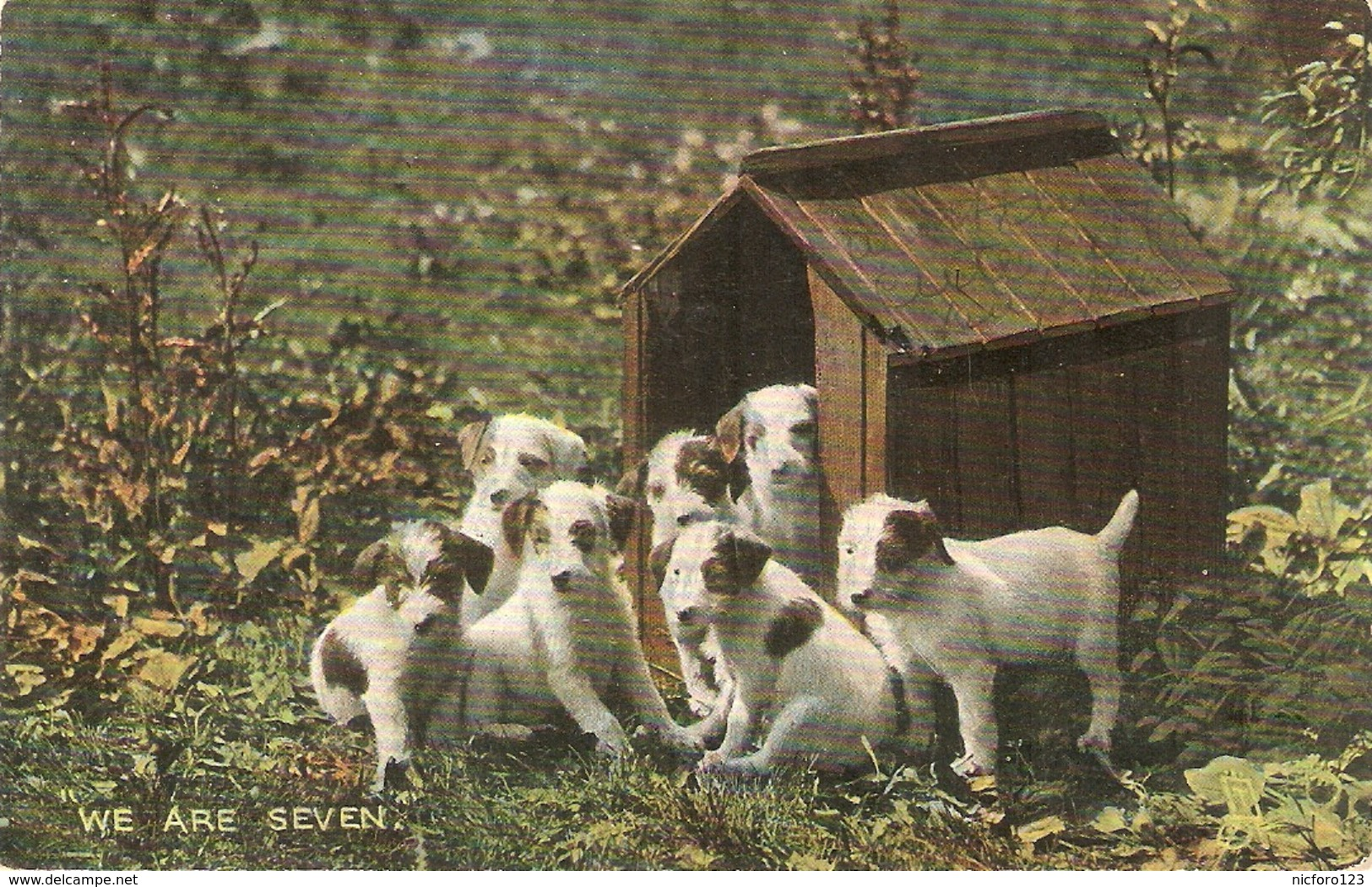 """""""Dogs. We Are Seven""""  Tuck Photoghrome Pretty Puppies Series PC # 4448 - Tuck, Raphael"""