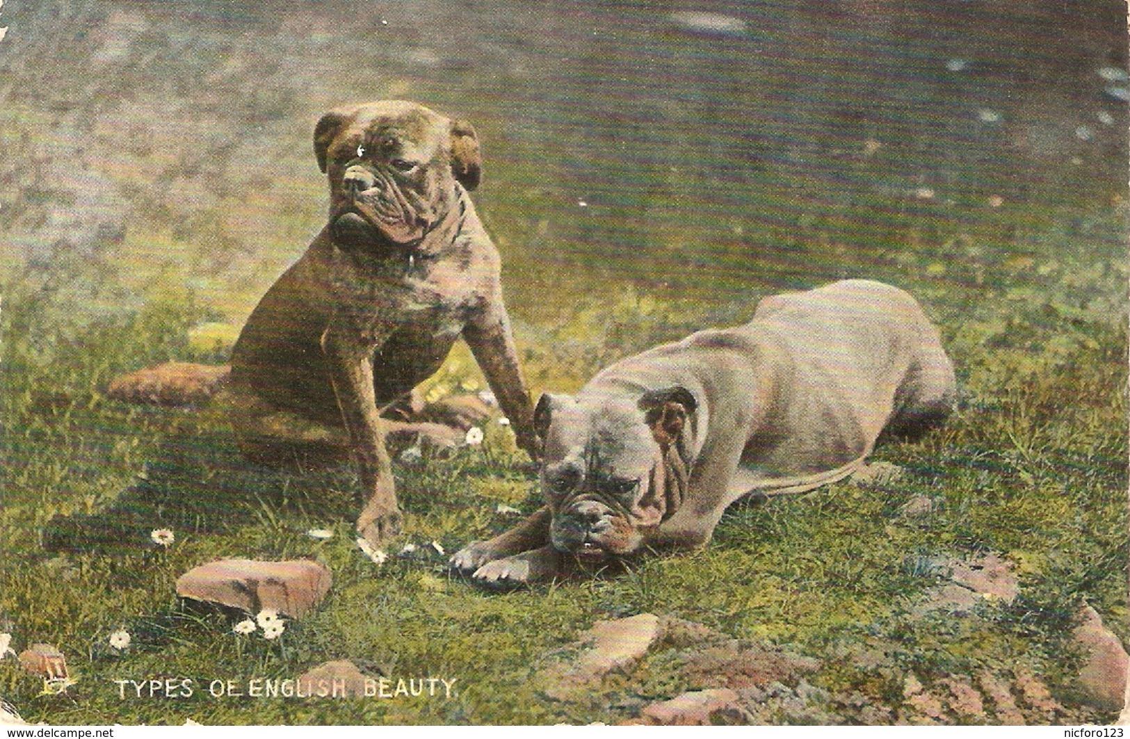 """Dogs. Types Of English Beauty"" Tuck Photochrome Animal Studies Series PC # 4453 - Tuck, Raphael"