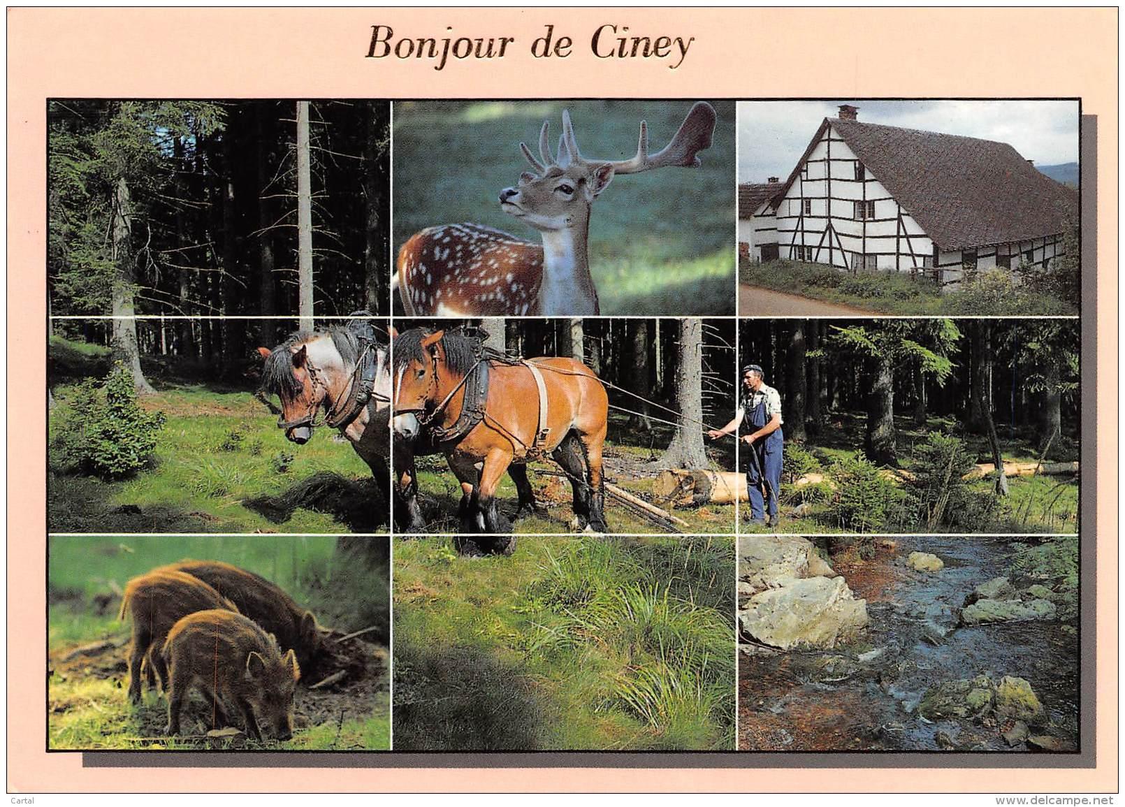 CPM - Bonjour De CINEY - Ciney