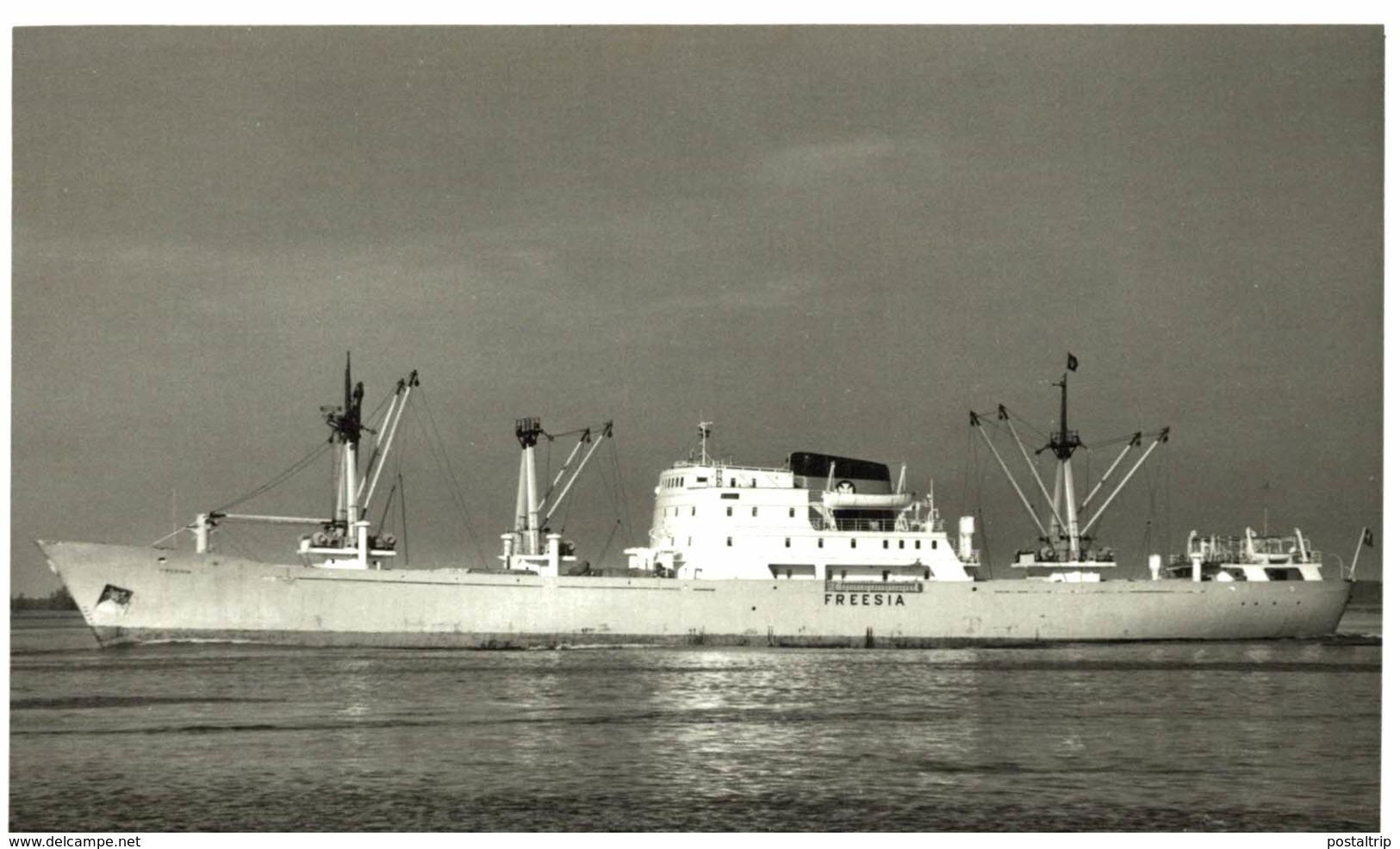 FREESIA 13,5 X 9 Cm  BARCO, BATEAU, SHIP  DINAMARCA, DENMARK, DANEMARK - Barcos