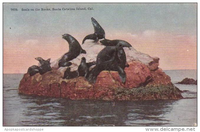 California Santa Catalina Island Seals On The Rocks