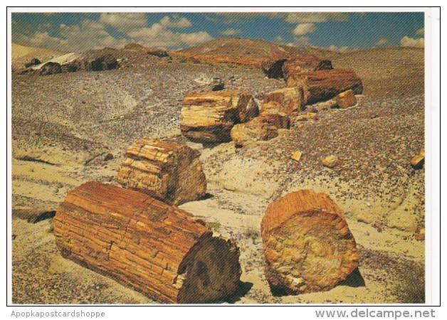 Arizona Petrified Logs Petrified Forest National Park