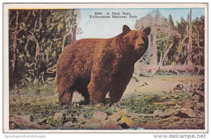 Yellowstone National Park A Park Bear