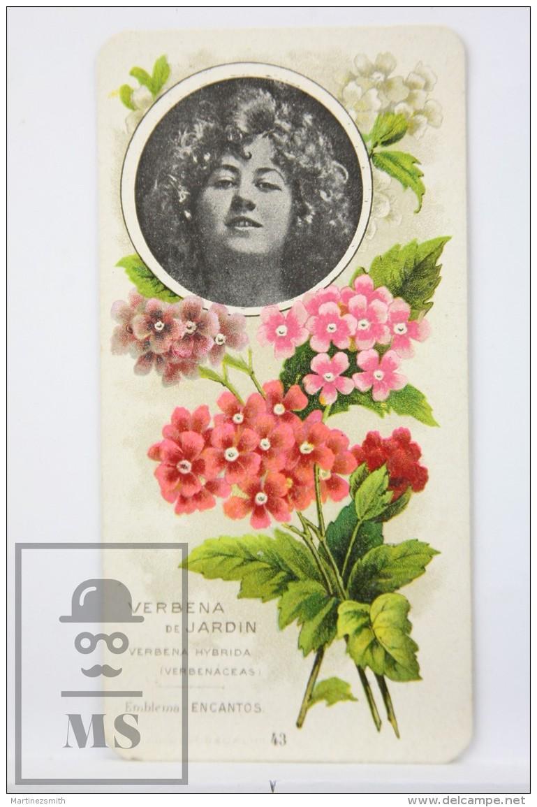 Old Modernist Trading Card / Chromo Flower - Vervain & Model - Jaime Boix Nº 43 - Documentos Antiguos