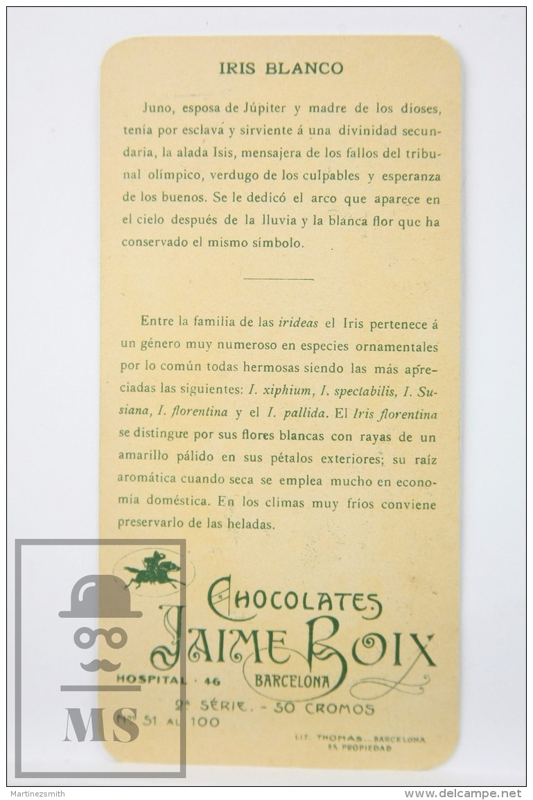 Old Modernist Trading Card / Chromo Flower - White Iris & Model - Jaime Boix Nº 54 - Documentos Antiguos