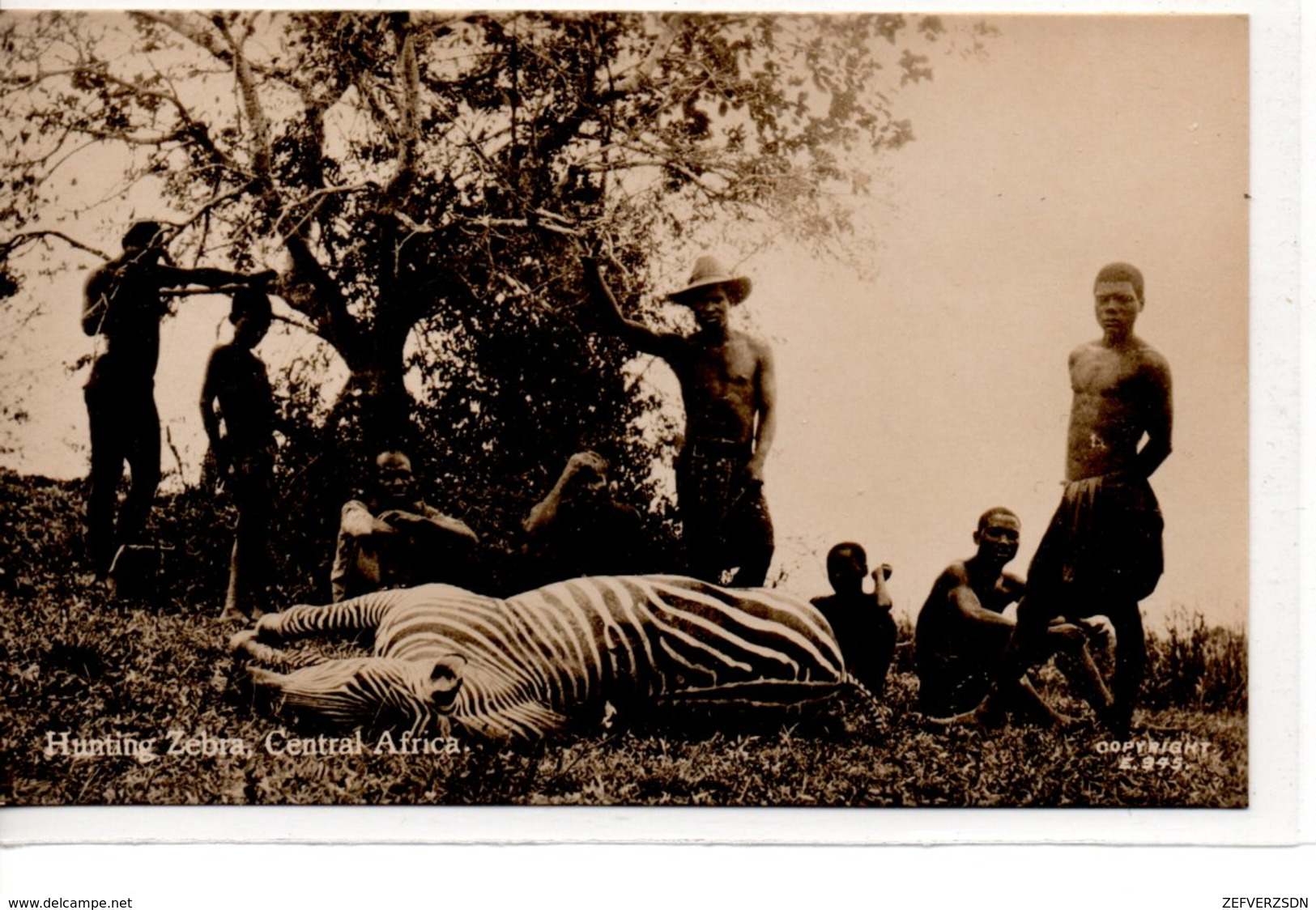 CHASSE ZEBRE CENTRAFRIQUE AFRIQUE DU SUD CARTE PHOTO HUNTING ZEBRA SAPSCO JOHANNESBURG - Centrafricaine (République)