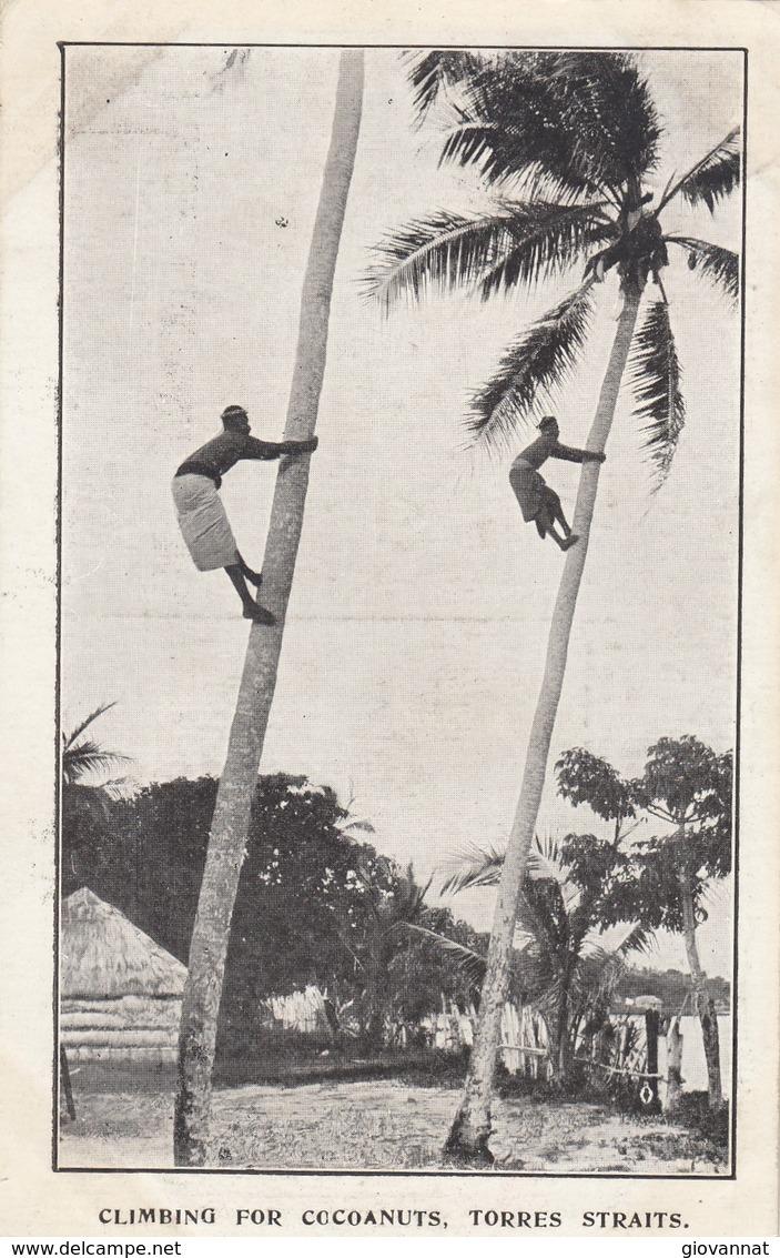 CLIMBING FOR COCOANUTS,TORRES STRAITS - Aborigènes