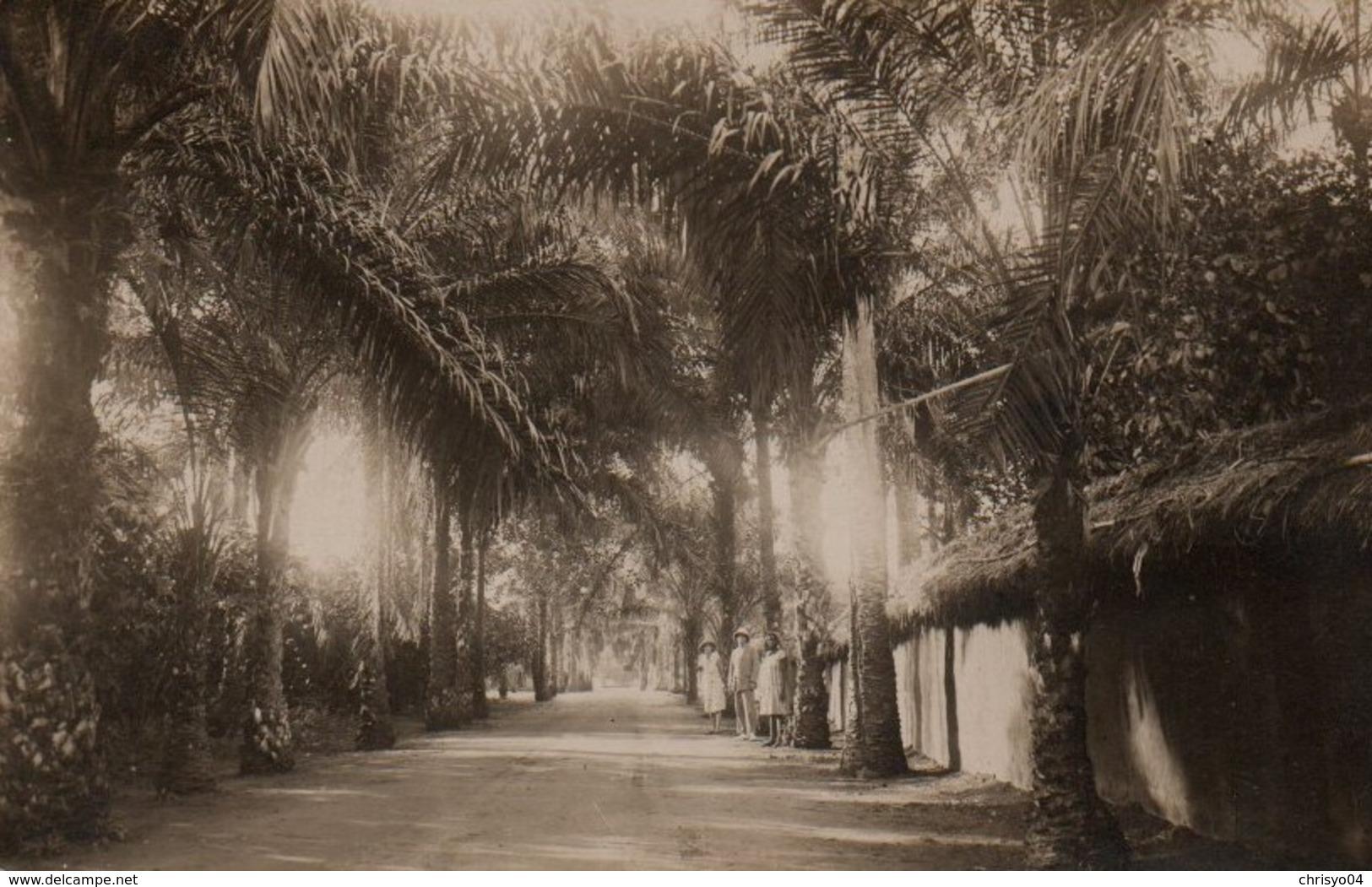 84Vn  Carte Photo Dahomey Porto Novo Avenue Entre Palmiers - Dahomey