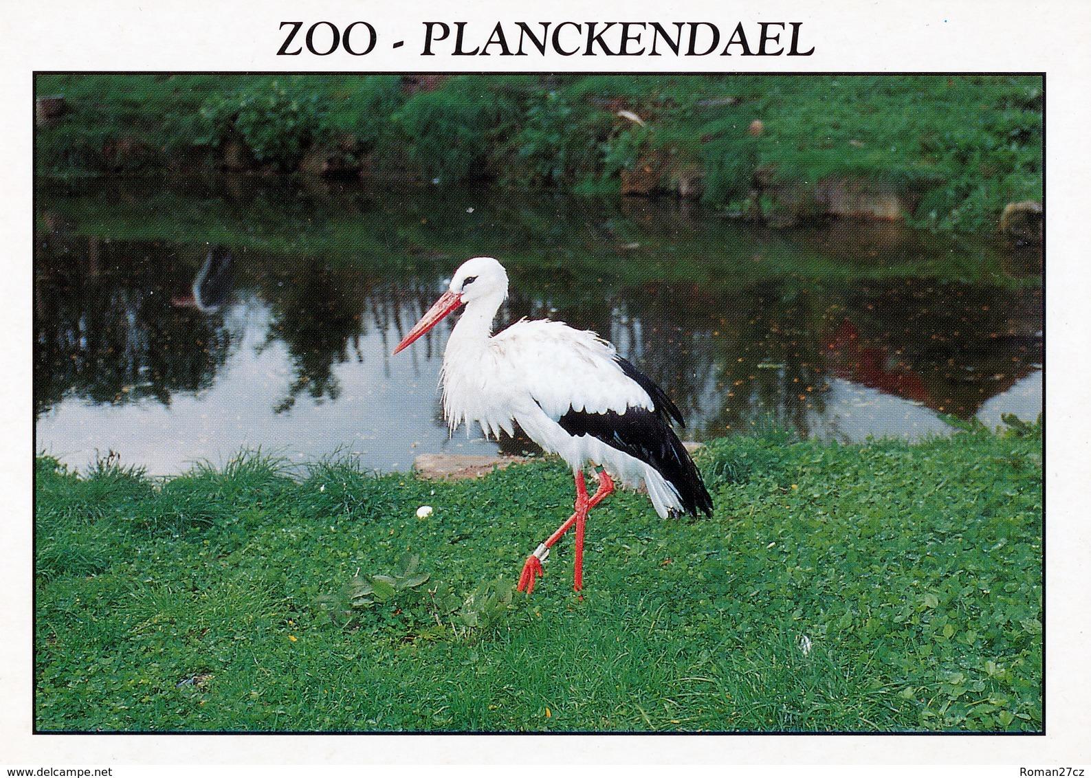 Dierenpark Planckendael, Belgium - Stork - Malines