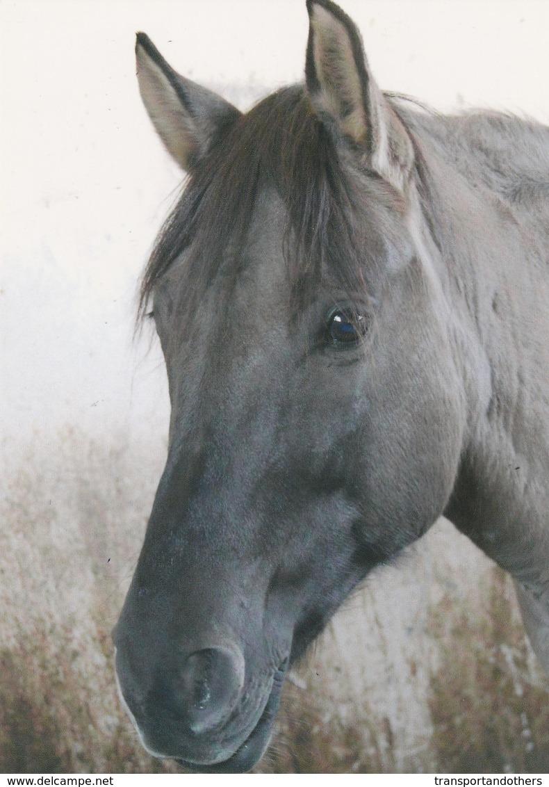 BEAUTIFUL HORSE POSTACARDS  / D - Pferde