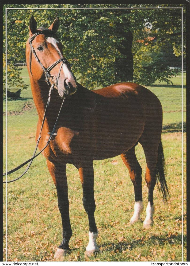 BEAUTIFUL HORSE POSTCARDS  / K - Pferde