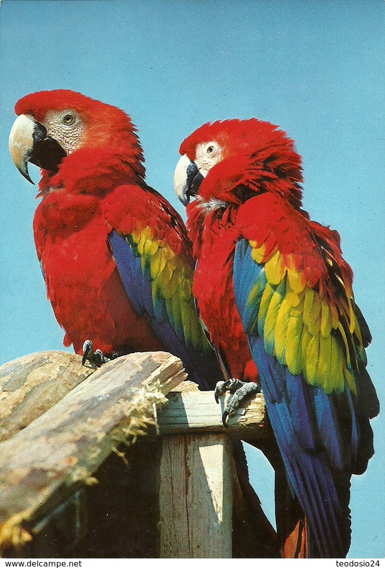 LORO CACATUA - Pájaros