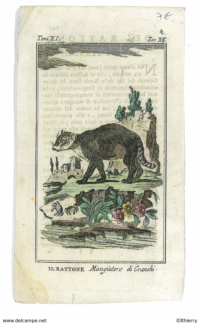 GRAVURE ISSUE LIVRE PEUT ETRE BUFFON ANIMAUX IL RATTONE - Prints & Engravings