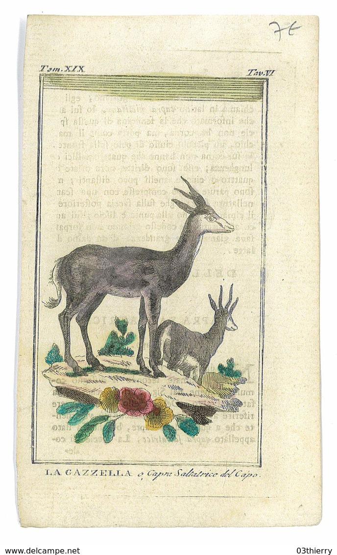 GRAVURE ISSUE LIVRE PEUT ETRE BUFFON ANIMAUX LA GAZZELLA - Prints & Engravings