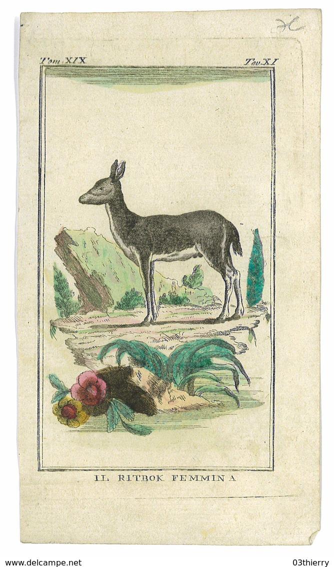 GRAVURE ISSUE LIVRE PEUT ETRE BUFFON ANIMAUX IL RITBOK FEMMINA - Prints & Engravings