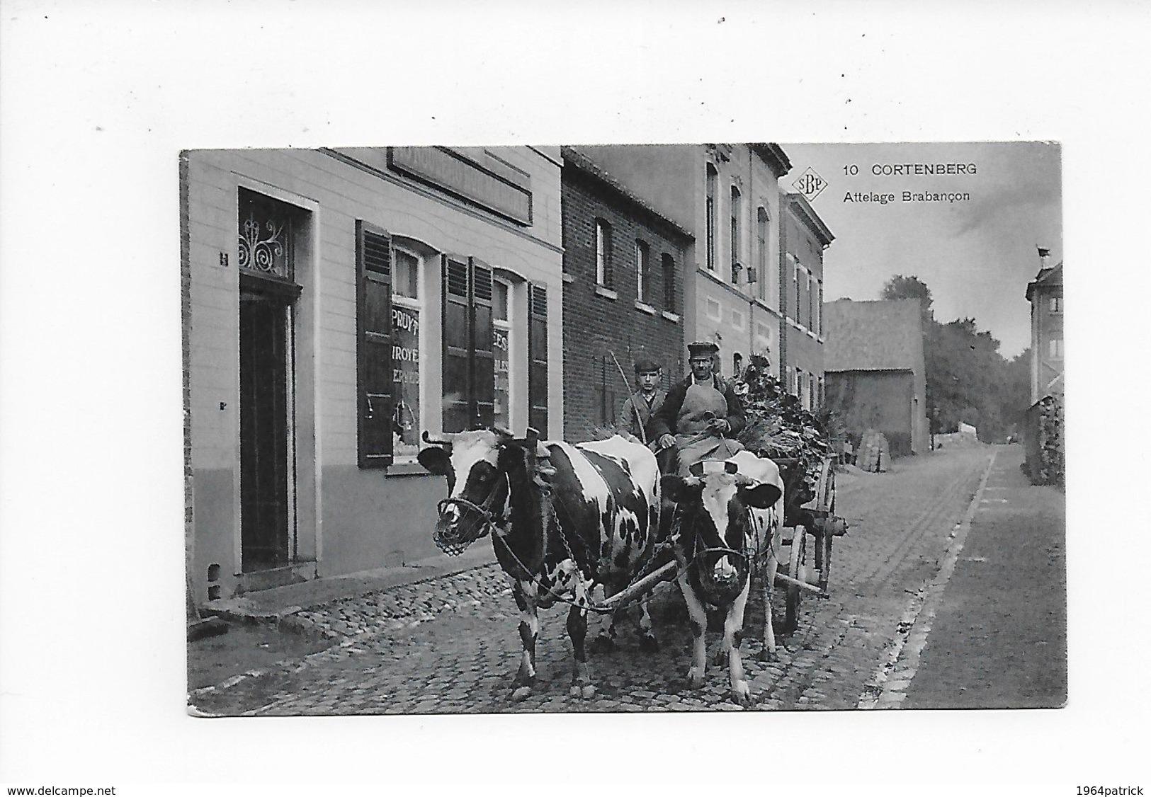 KORTENBERG 1909  CORTENBERG  ATTELAGE BRABANCON   SBP !!!  SUPER ANIMATIE - Kortenberg