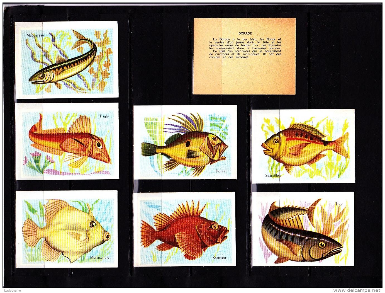 Lot 16 Images Cartonnée, Poissons, Scolaire, Bon Point - Vieux Papiers