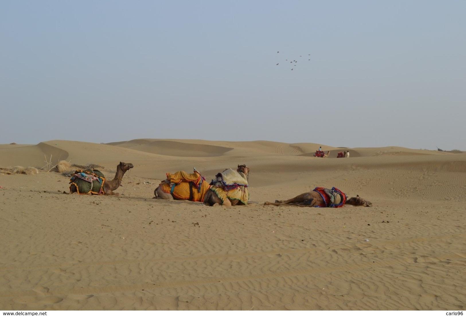 ASIA  INDIA  RAJASTHAN  SABBIA  DEL  DESERTO  DEL  THAR - Sabbia