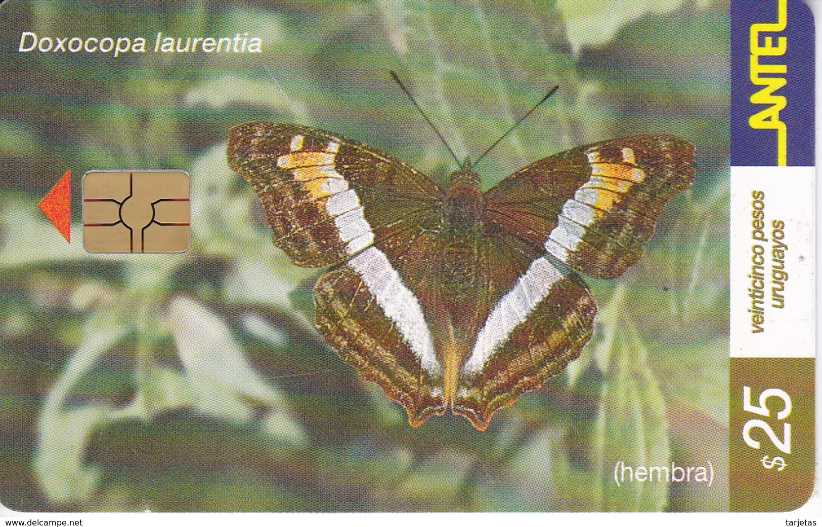 Nº 185 TARJETA DE URUGUAY DE ANTEL DE UNA DOXOCOPA LAURENTIA (MARIPOSA-BUTTERFLY) CHIP ROJO - Uruguay