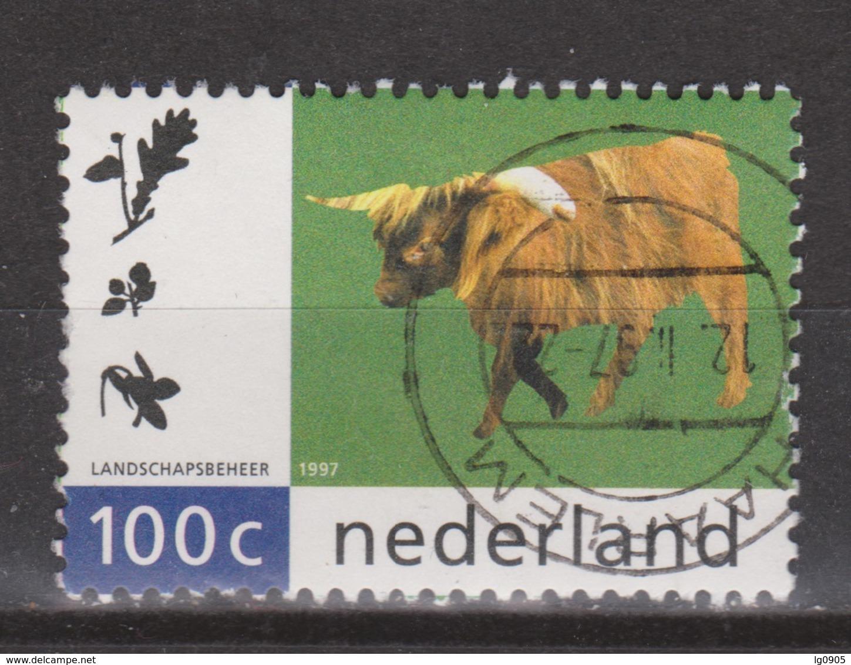 Netherlands Nederland Niederlande Pays Bas 1712 Used ; Schotse Hooglander - Koeien