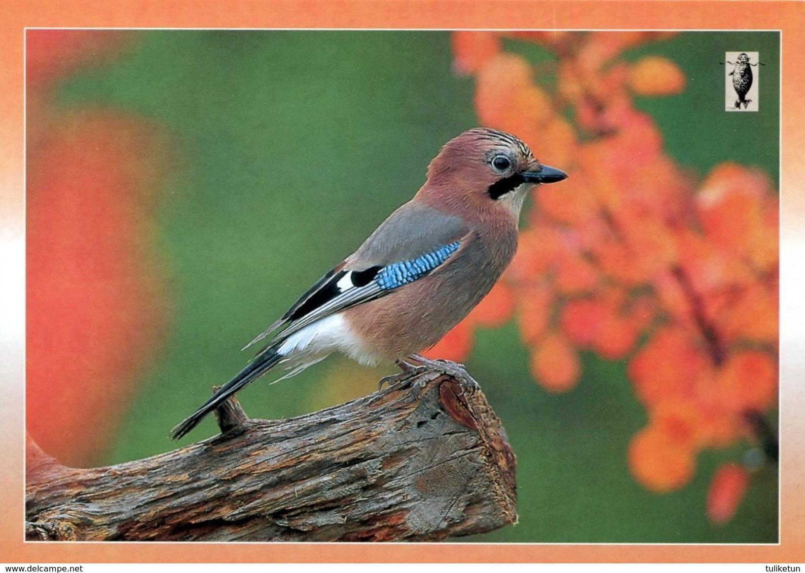 Bird - Oiseau - Vogel - Uccello - Pássaro - Pájaro - Animal - Fauna - Jay - Närhi - (Ringed Seal Logo) - Uccelli