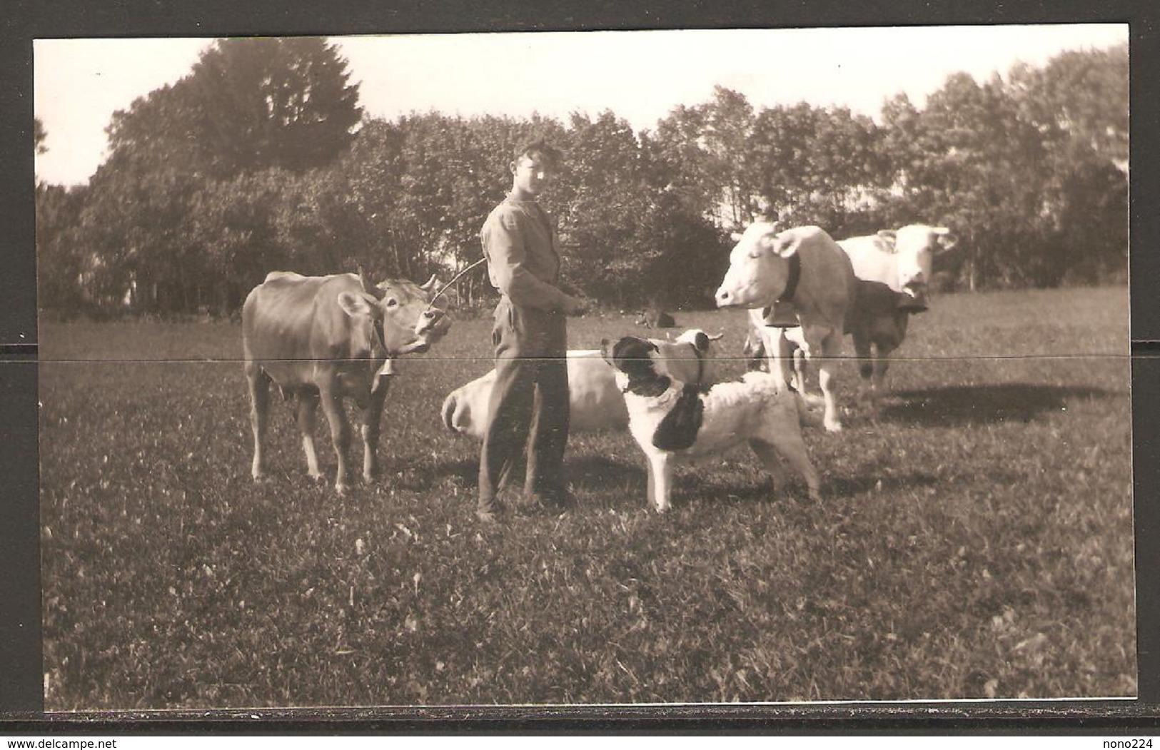 Carte P ( Les Vaches ) - Vaches
