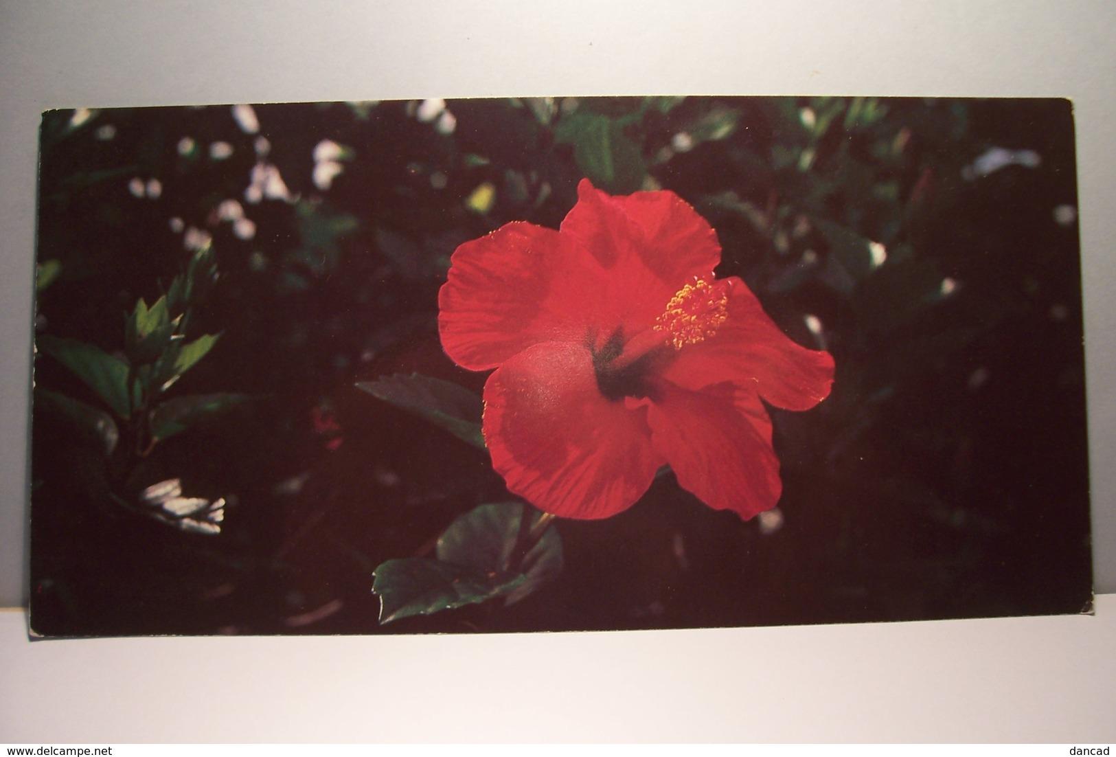 GUYANE   -  FLORE -  Hibiscus Rosa Sinensis-  Carte Grand Format - ( Pas De Reflet Sur L'original ) - Guyane