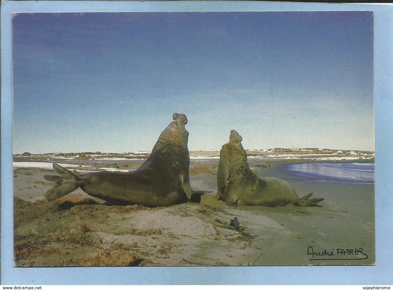 Kerguelen Combat D'Elephants De Mer (Mirounga Leonina) 2scans Photo A. Fatras 22-09-1985 Terres Australes Françaises - TAAF : Terres Australes Antarctiques Françaises