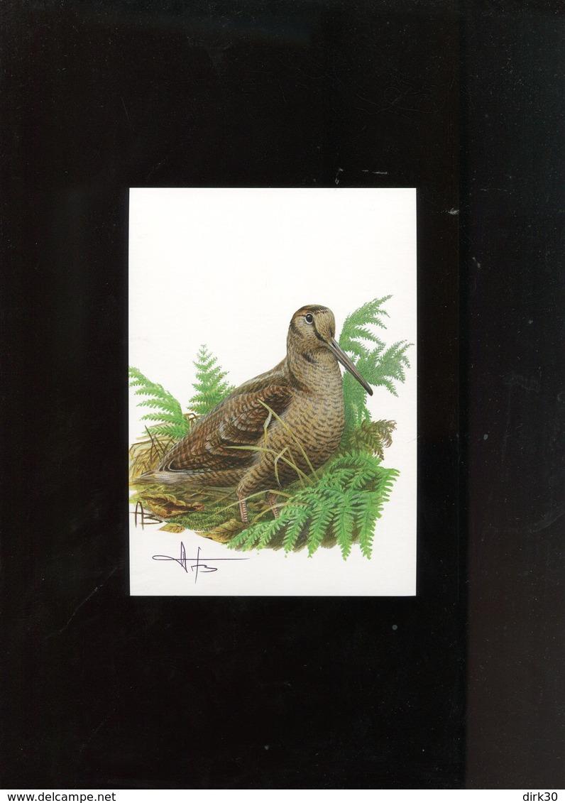 Belgie Andre Buzin Birds 3898 Becasse Herdenkingskaart Blanco + Signature Andre Buzin RRR - 1985-.. Birds (Buzin)