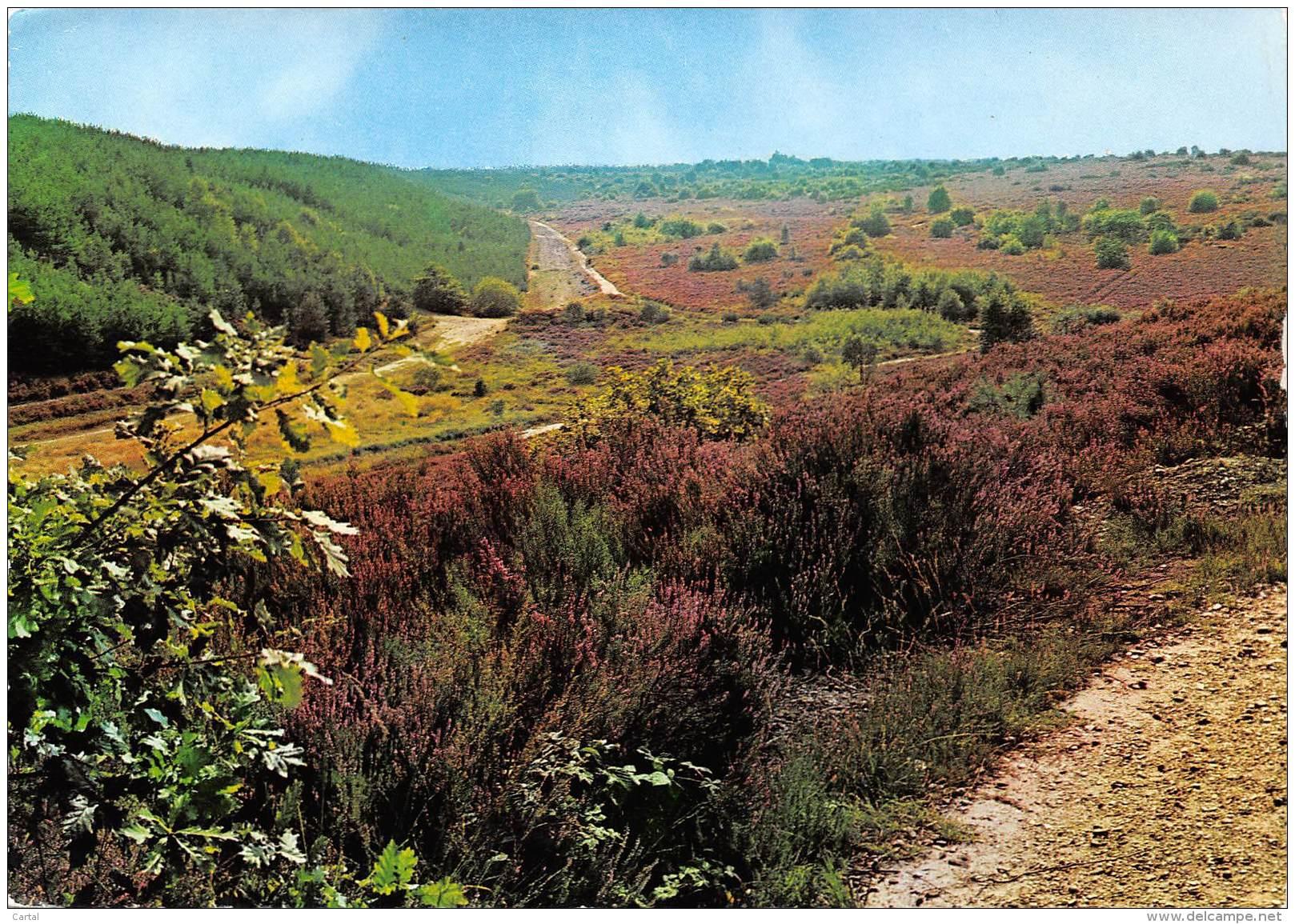 """CPM - MAASMECHELEN - Natuurreservaat """"De Mechelse Heide"""" - Maasmechelen"""
