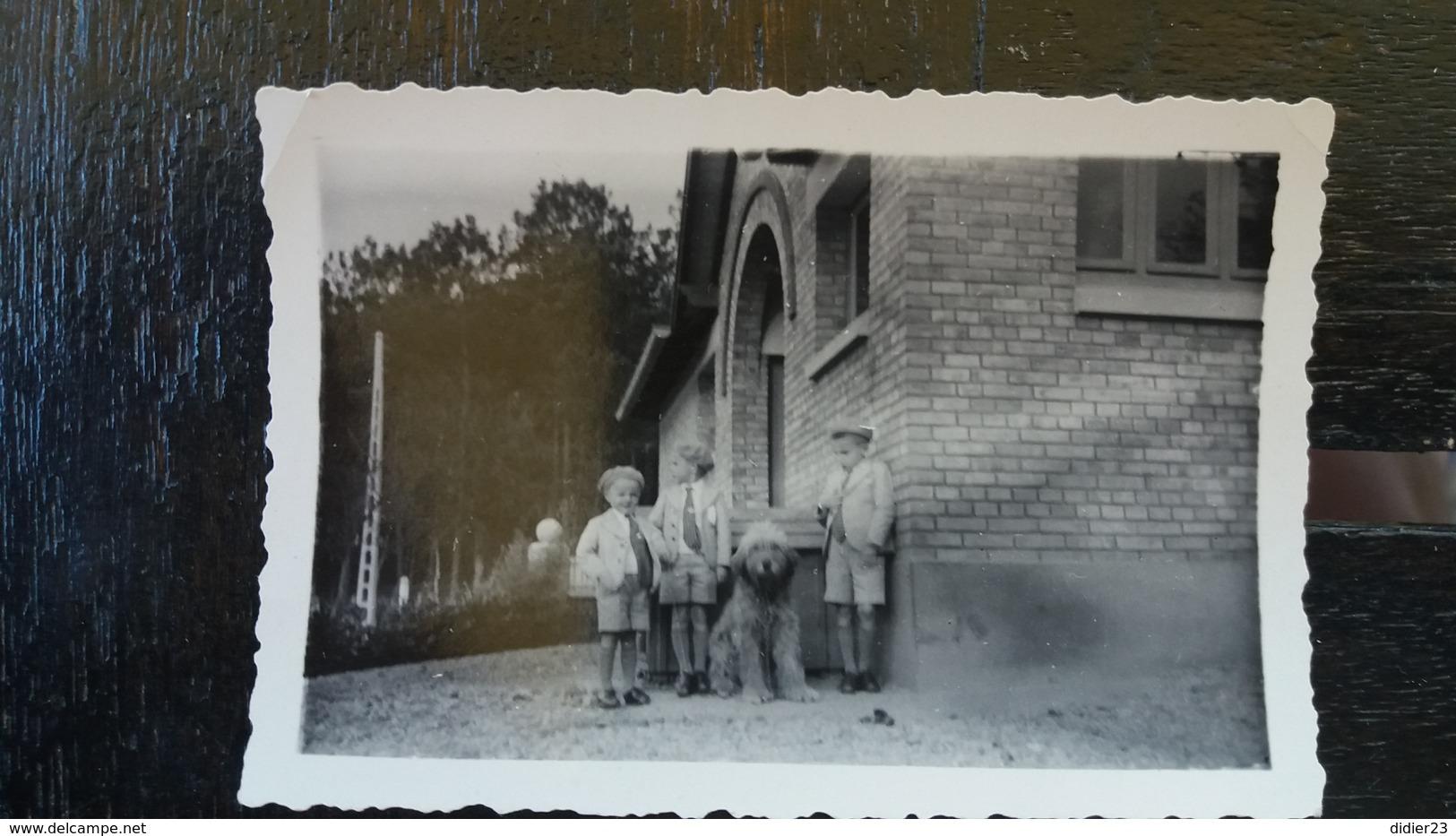 PHOTO ORIGINALE DE CHIEN 1935 BERGER DE BRIE Ou BRIARD ?? - Dogs