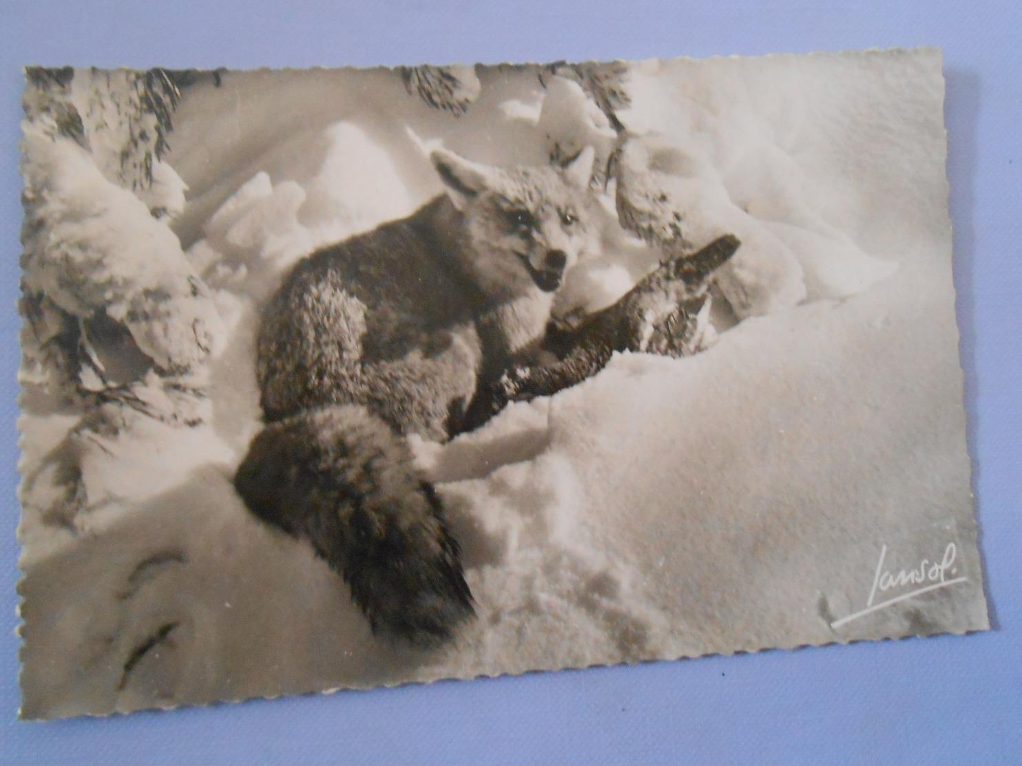 Cpsm- Fantaisie ; Carte-postale-----Postcard---RENARD--/A11/ - Animaux & Faune