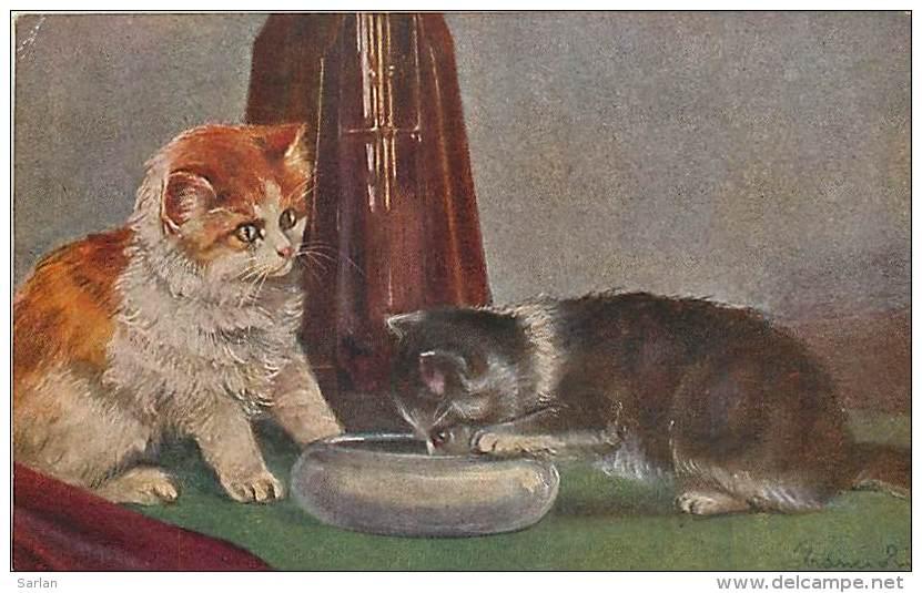 Chats , Chatons , * 231 60 - Gatos