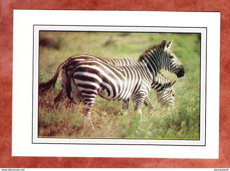 AK Zebras, EF Ceropegia Ballyana, Mombasa Nach Uster 1987 (56963) - Kenia (1963-...)