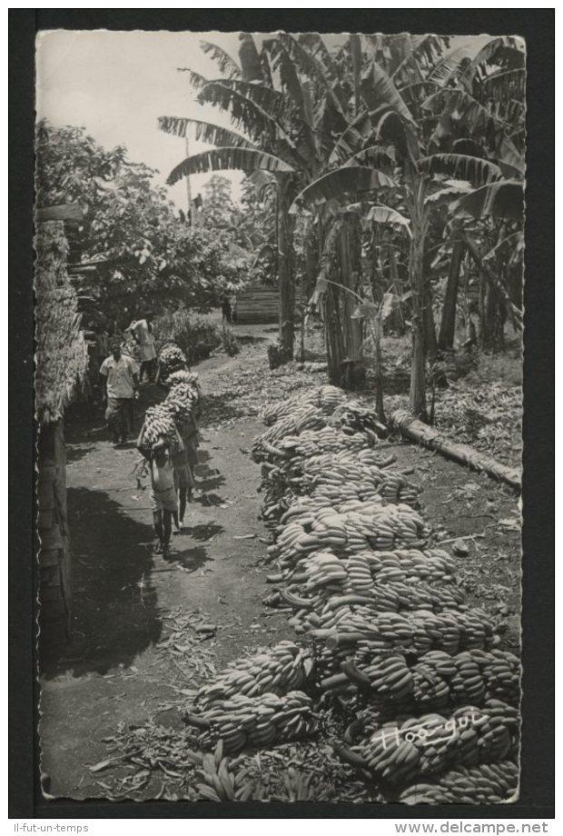 AFRIQUE OCCIDENTALE - AOF - La Récolte Des Bananes - Cartes Postales