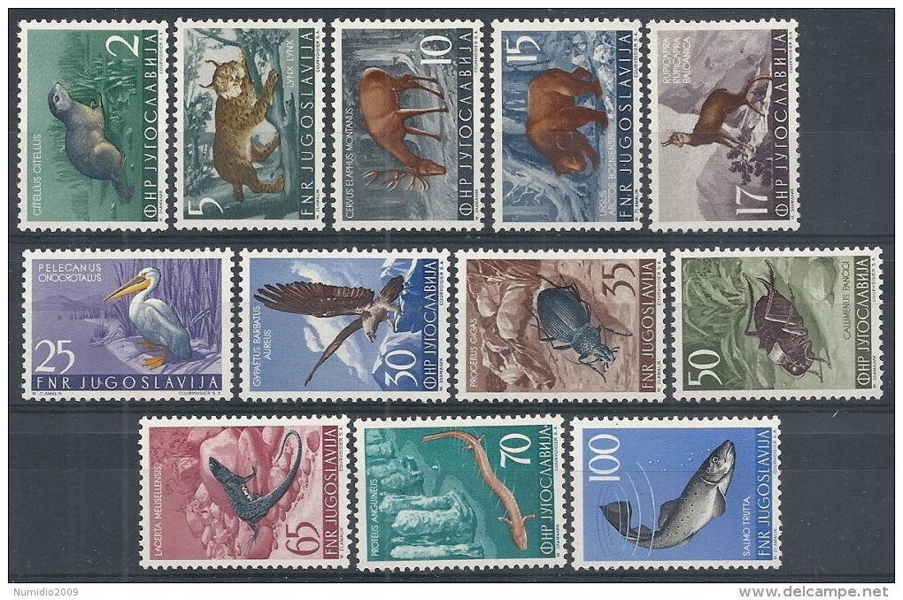 1954 JUGOSLAVIA ANIMALI MNH ** - RR12588 - 1945-1992 Repubblica Socialista Federale Di Jugoslavia