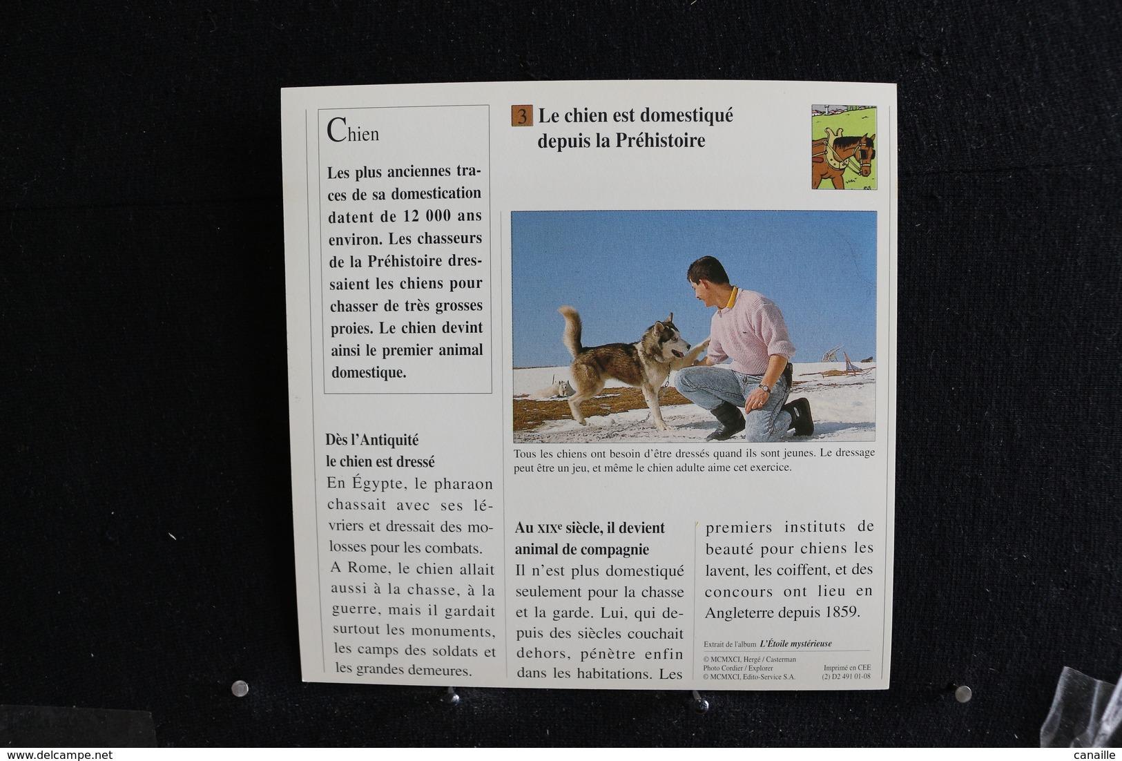 Fiche Atlas, TINTIN (extrait De,L'Étoile Mystérieuse) - Animaux Domestiques N°4. Depuis Quand Le Chien Est-il Domestiqué - Sammlungen