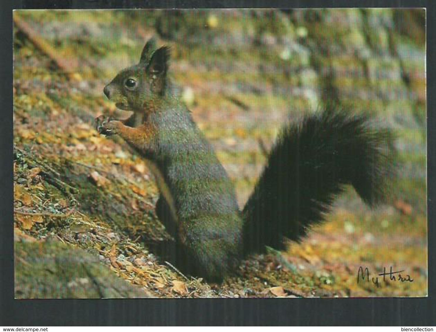 Thème Animal. Ecureuil, Ardilla, Squirrel - Animaux & Faune