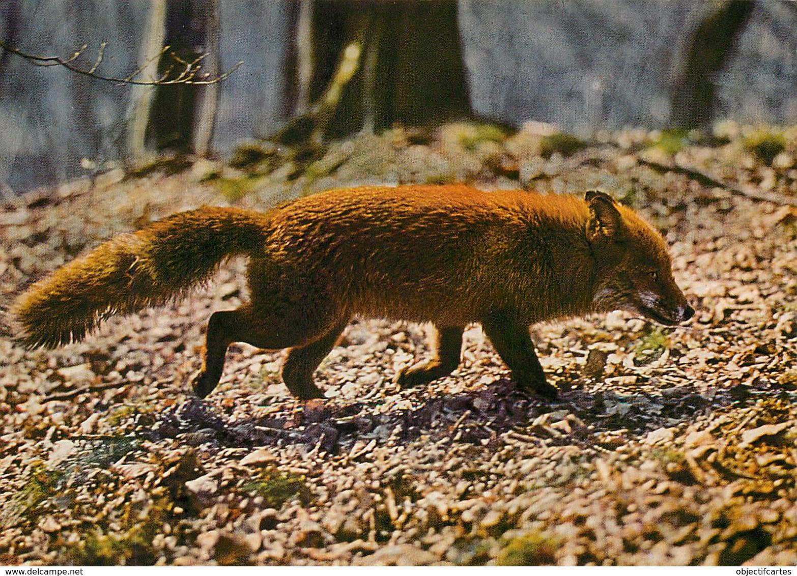 RENARD Canis Vulpes Fox Fuchs  48 (scan Recto-verso)MA2270Bis - Animaux & Faune