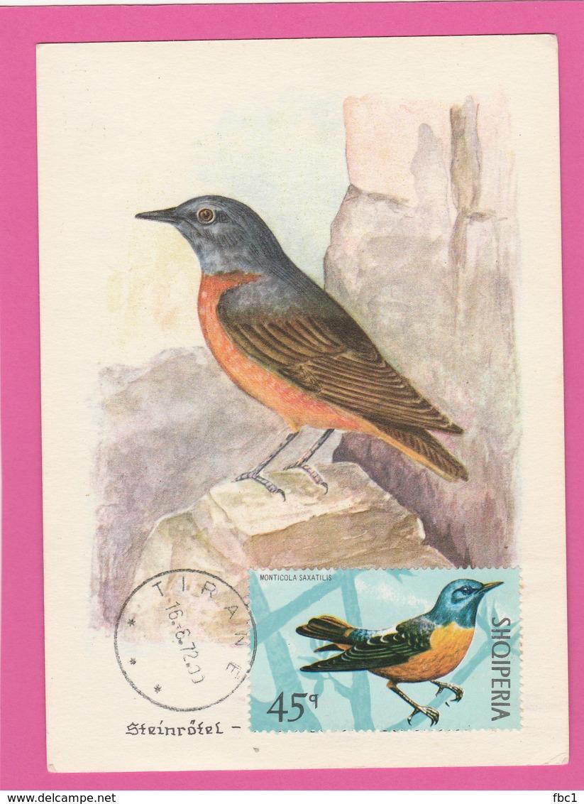 Carte Maximum - Oiseaux - Monticole Merle De Roche - Albanie - 1972 - Oiseaux
