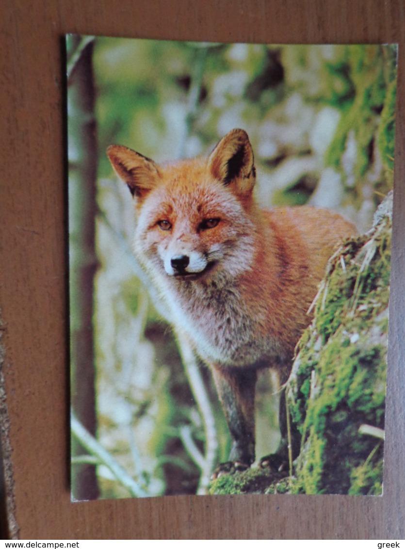 Vos - Renard - Fox  --> Unwritten - Animaux & Faune
