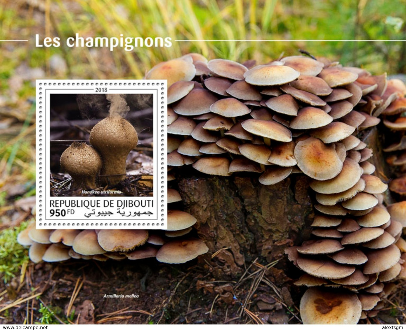 DJIBOUTI 2018 - Mushrooms S/S. Official Issue - Funghi