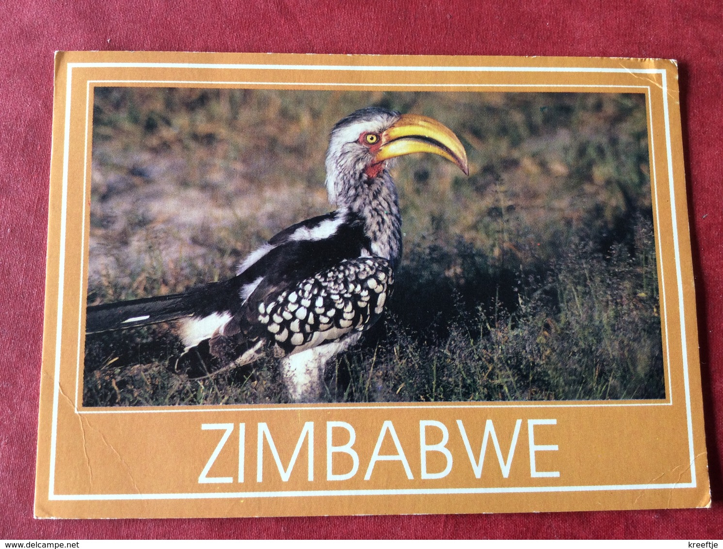 Zimbabwe Yellow Hornbill 1992 - Zimbabwe