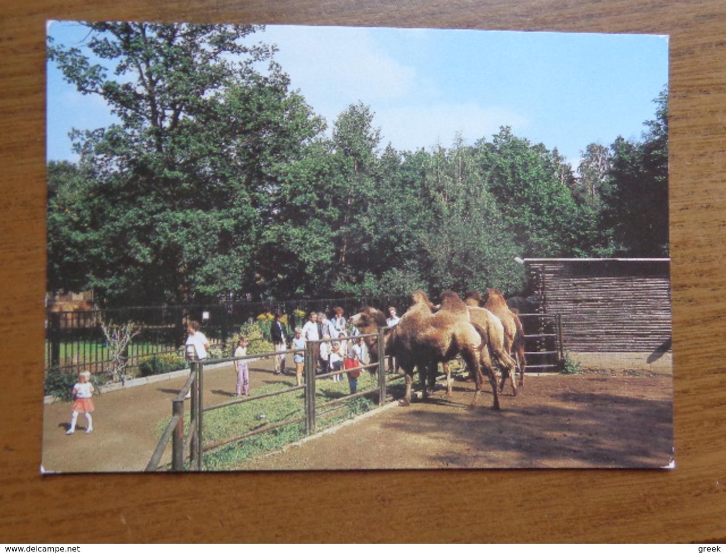 Deutschland / Chemnitz, Tierpark An Der Petsmuhle (kameel, Camel) --> Unwritten - Chemnitz