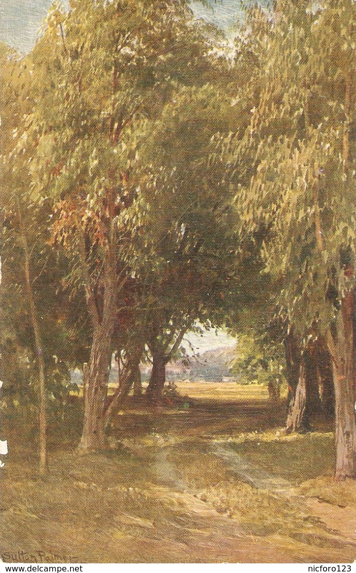"""Sutton Palmer. A Eucalyptus .Grove. California"" Tuck Oilette Glorious California Sr.PC # 3513 - Tuck, Raphael"