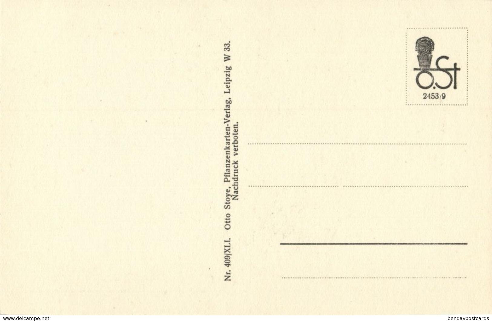 Cactus Cactaceae, Echinocactus Odieri Lem. (1920s) Otto Stoye Postcard - Cactusses