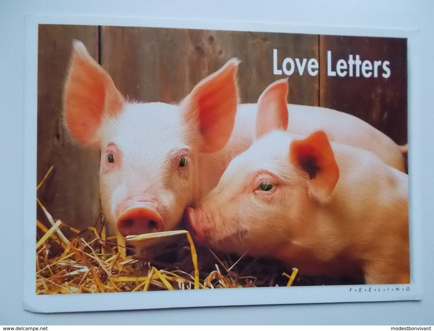 Edit. Feeling : LOVE LETTERS - Cochons